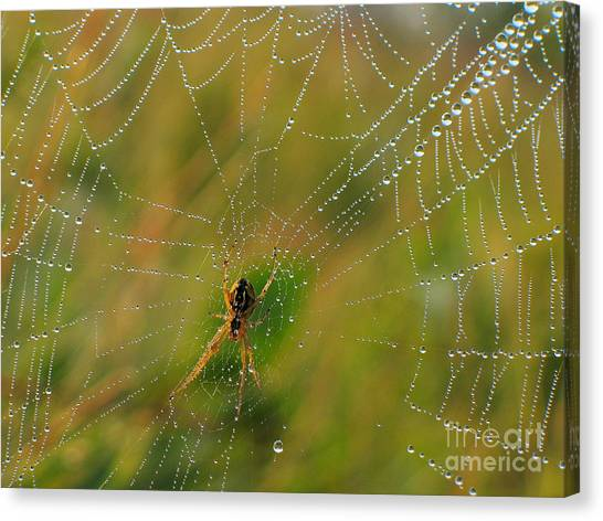 Spiderweb Canvas Print by Odon Czintos