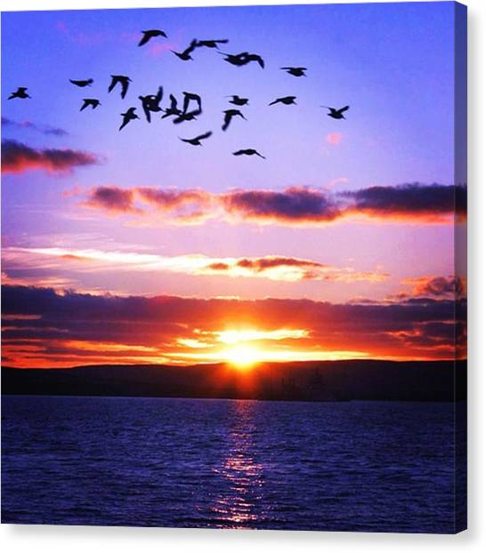 Drinks Canvas Print - Sunset by Luisa Azzolini