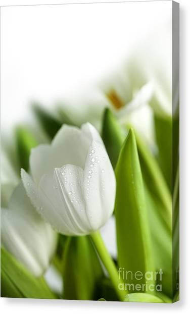 Water Drop Canvas Print - White Tulips by Nailia Schwarz