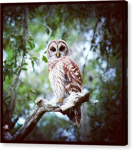 Birds Canvas Print - Instagram Photo by Mandy Shupp