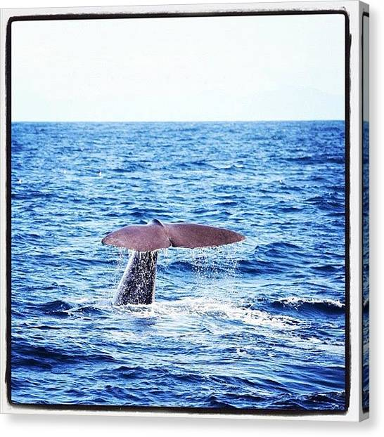 Whales Canvas Print - #norway #norwegian #instanorway by Anna P