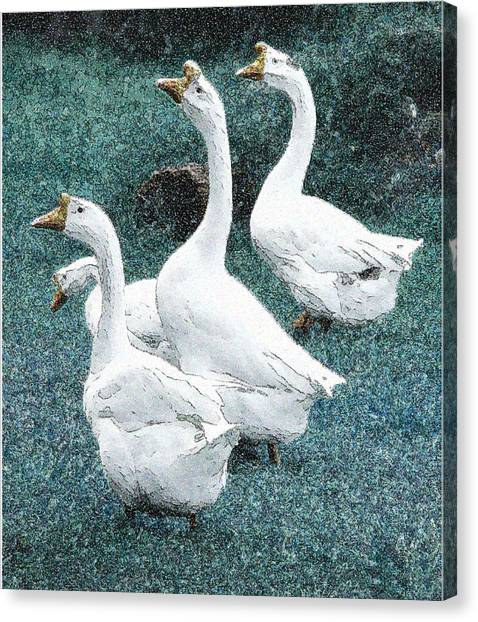 4 Ducks Canvas Print