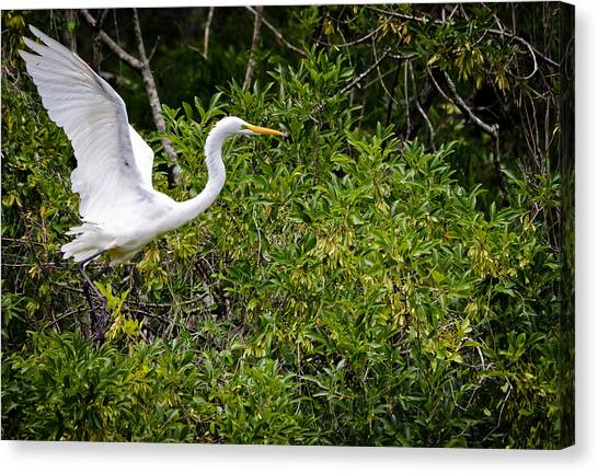 Great Egret Canvas Print by Mike Rivera