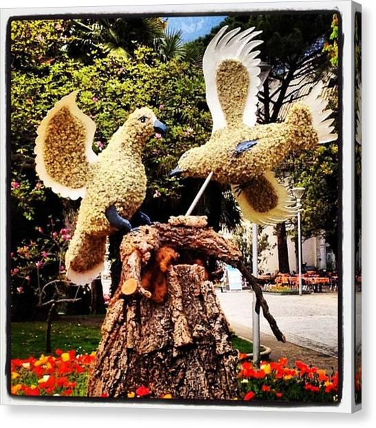 Birds Canvas Print - Instagram Photo by Luisa Azzolini