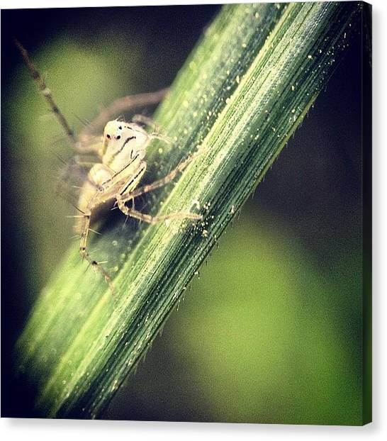 Spiders Canvas Print - #iphoneography #picoftheday by Sooonism Heng
