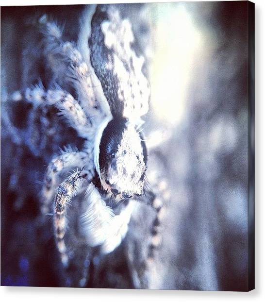 Spiders Canvas Print - #nature #macro #igmacro #ig_macro by Sooonism Heng