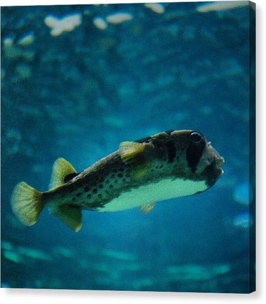 Aquariums Canvas Print - Paris - Aquarium Du Trocadero by Tony Tecky