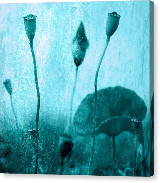 Poppy Art Image Canvas Print by Falko Follert