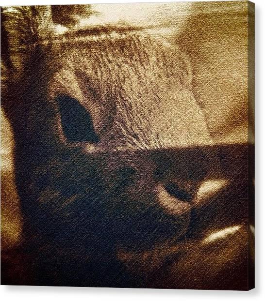 Rabbits Canvas Print - #tagstagram .com #instalove #igaddict by Cecilie  Lund