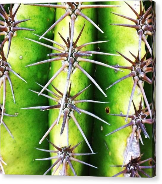 Plants Canvas Print - Instagram Photo by Ritchie Garrod