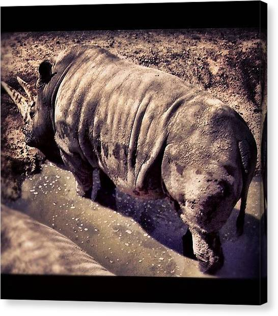 Rhinos Canvas Print - Instagram Photo by Julianna Rivera-Perruccio