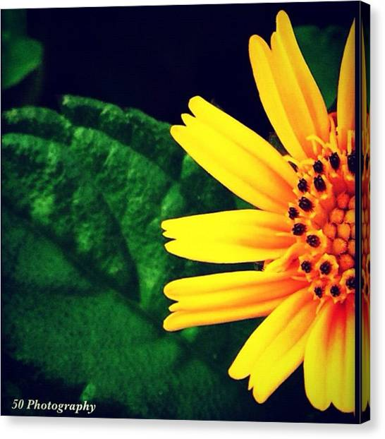 Iphone 4 Canvas Print - Instagram Photo by Ippe Fifty