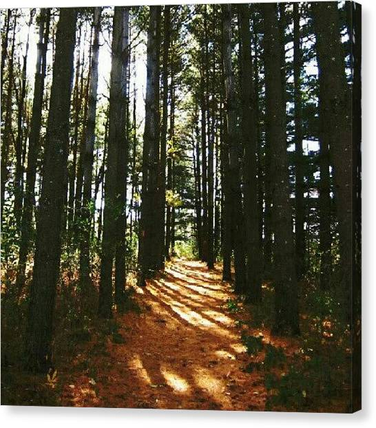 Forest Paths Canvas Print - Shining Through by Laura Doty
