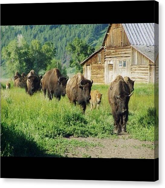 Tetons Canvas Print - Instagram Photo by Harold Coombs III