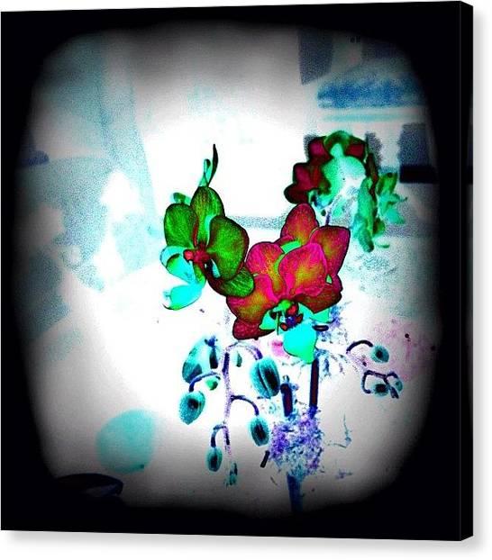 Orchids Canvas Print - #awesome #all_shots #architecture by Elizabeth Maldonado
