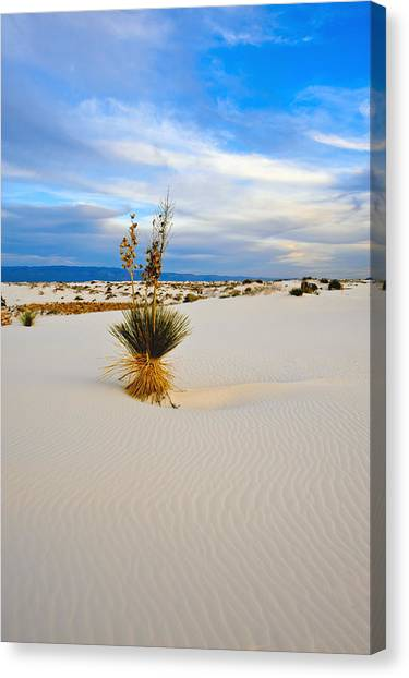 White Sands Canvas Print by Larry Gohl