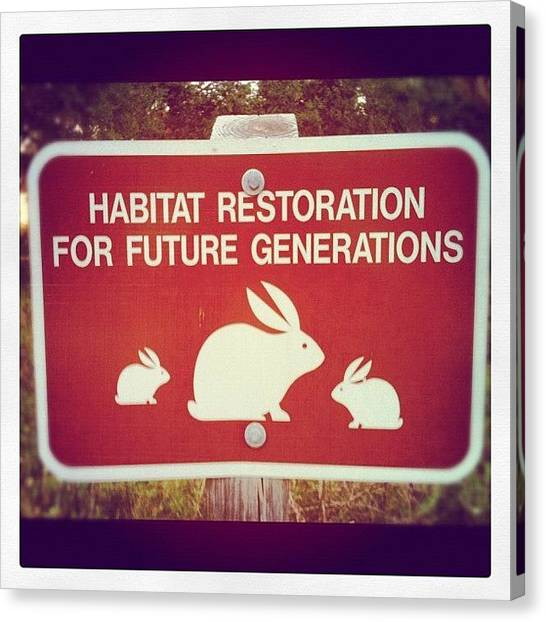 Rabbits Canvas Print - 4therabbits by Dustin Goolsby