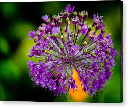 Flowers Canvas Print by Mike Rivera