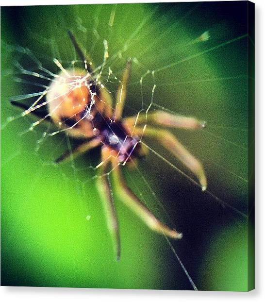Spiders Canvas Print - #macro #macroworld #macrogardener by Sooonism Heng