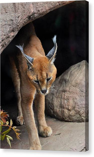 Mix Selection Of Animals  Canvas Print