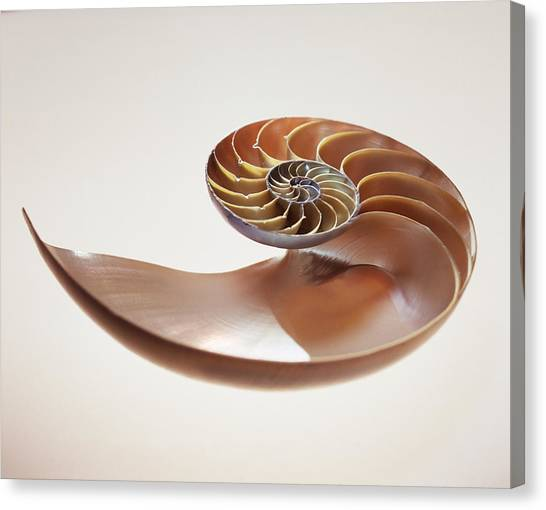 Nautilus Shell Canvas Print by Lawrence Lawry