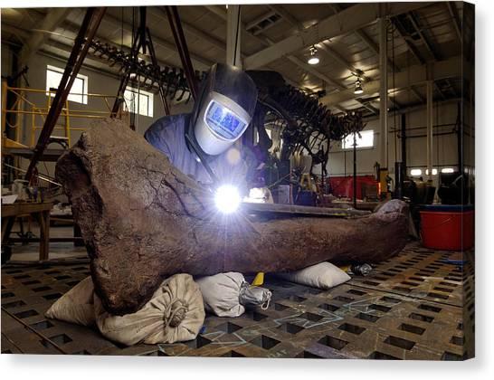 T-bone Canvas Print - Tyrannosaurus Rex Refurbishment by Volker Steger