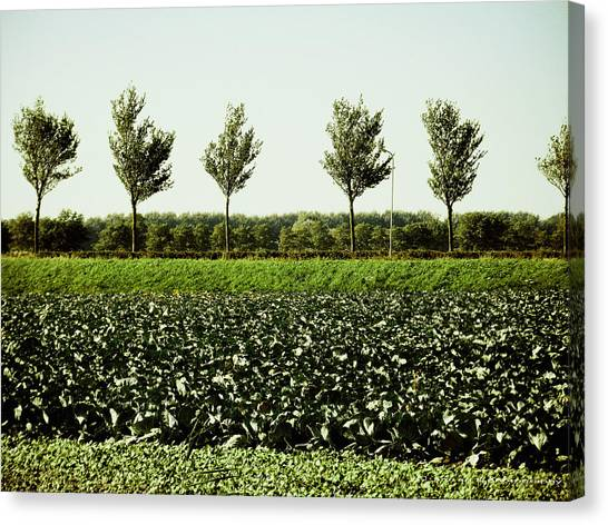 50 Shades Of Green Canvas Print