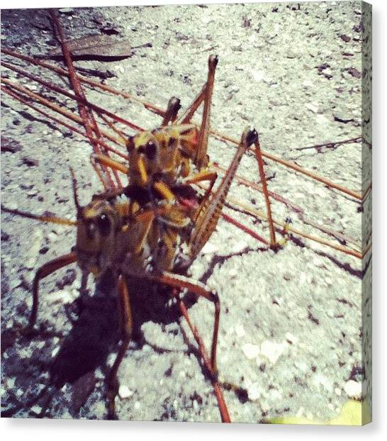 Grasshoppers Canvas Print - #love #tweegram #instagood #iphonesia by Andrew Brunelle