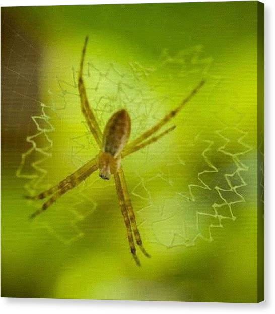 Spiders Canvas Print - #macro #macroporn #macrophotography by Uriel Gonzalez