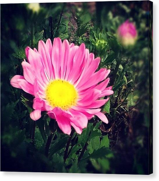 Gym Canvas Print - #macromania #macro_flower by Christina Pabustan