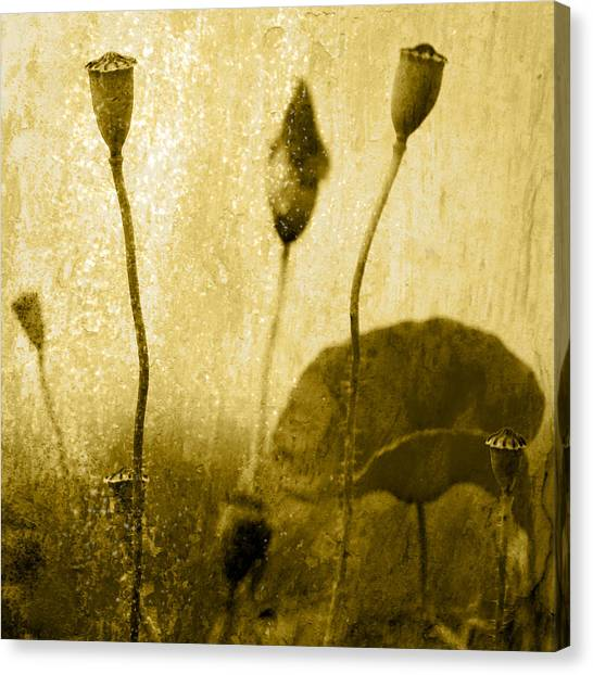 Poppy Art Image Canvas Print by Falko Follert