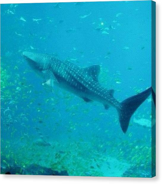 Reef Sharks Canvas Print - Instagram Photo by Harold Coombs III