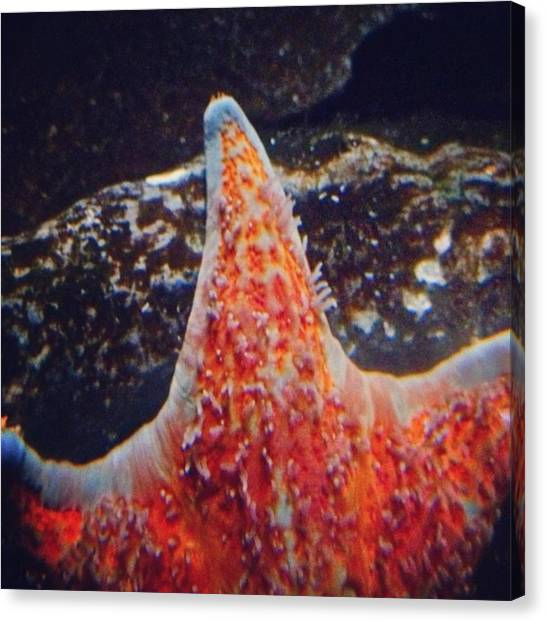 Ocean Animals Canvas Print - Instagram Photo by Pete Michaud