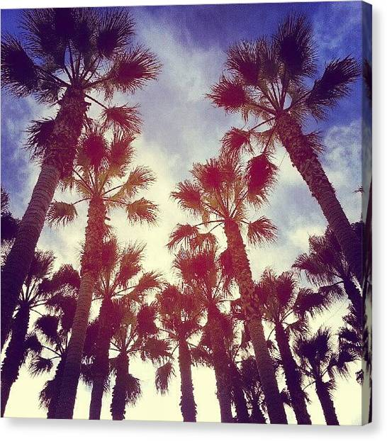 Palm Trees Sunsets Canvas Print - Instagram Photo by Saul Jesse Beas