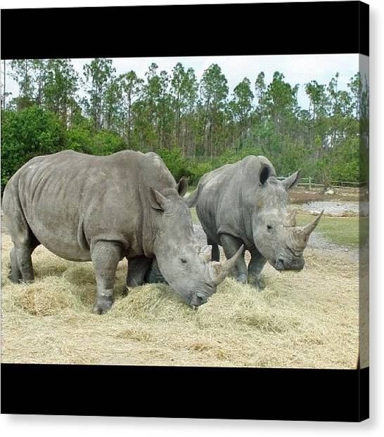 Rhinos Canvas Print - Instagram Photo by Harold Coombs III