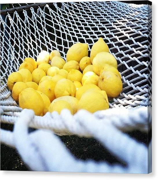 Lemons Canvas Print - Instagram Photo by Kelly Franklin