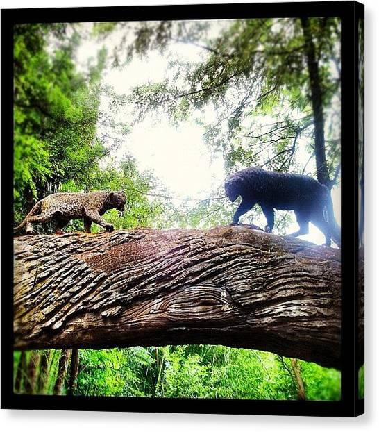 Panthers Canvas Print - Instagram Photo by Nancy Nancy