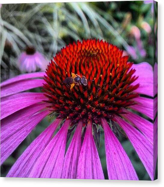 Droid Canvas Print - Another #beautiful #summer Day In The by Carla From Central Va  Usa