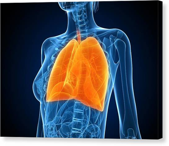 Healthy Lungs, Artwork Canvas Print by Sciepro