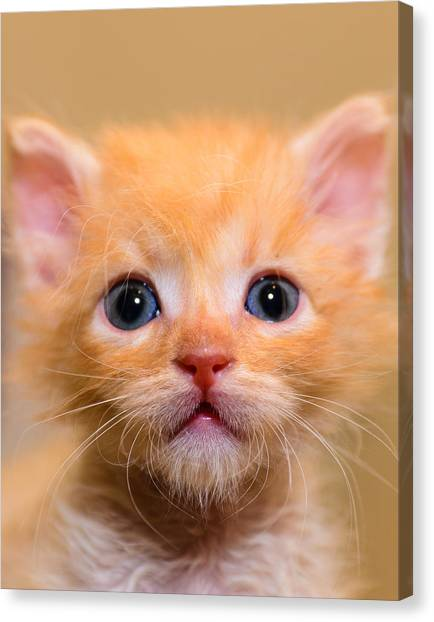 Kitty Canvas Print