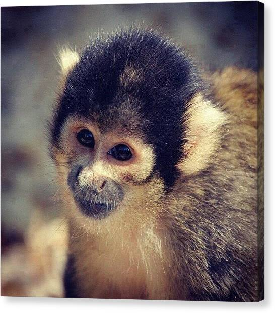 Primates Canvas Print - Instagram Photo by Jessika Fryer