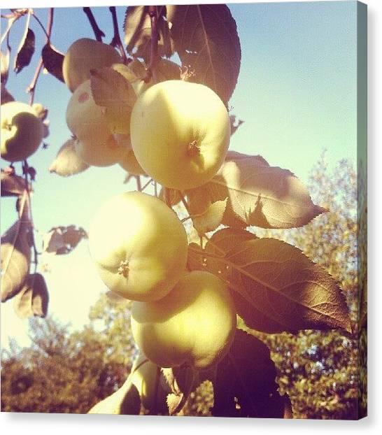 Apple Tree Canvas Print - Instagram Photo by Igor Shevchenko