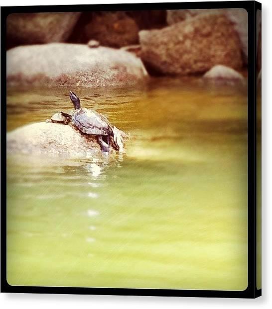 Turtles Canvas Print - Instagram Photo by Priyanka Boghani