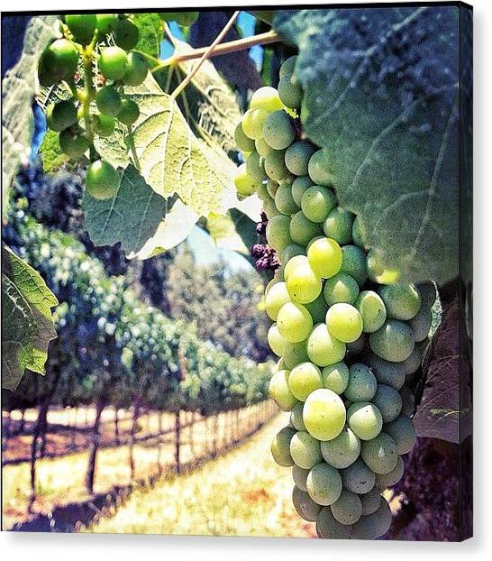 Grapes Canvas Print - Instagram Photo by Karen O