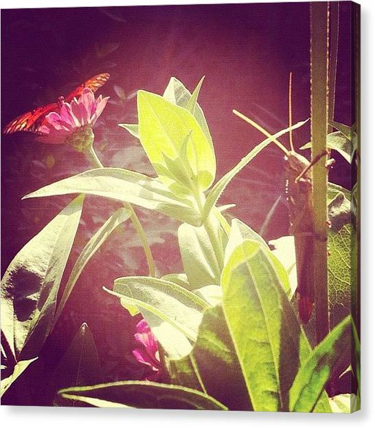 Grasshoppers Canvas Print - Instagram Photo by Megan Lacy