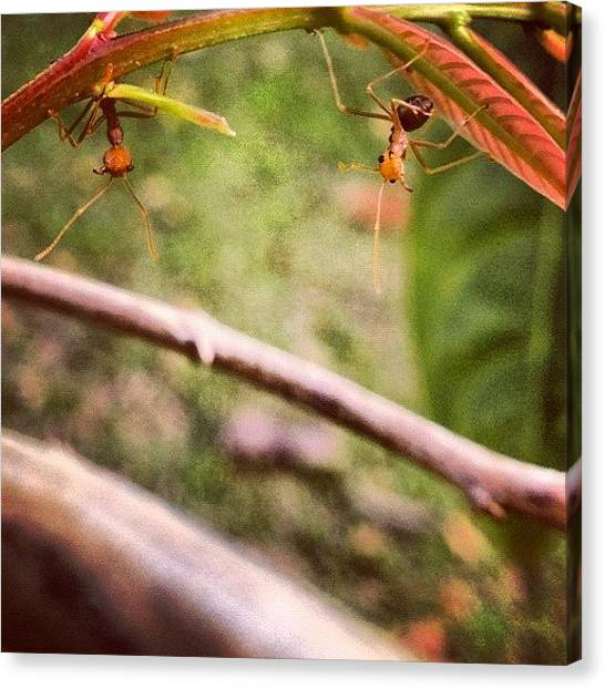 Ants Canvas Print - Instagram Photo by Sooonism Heng