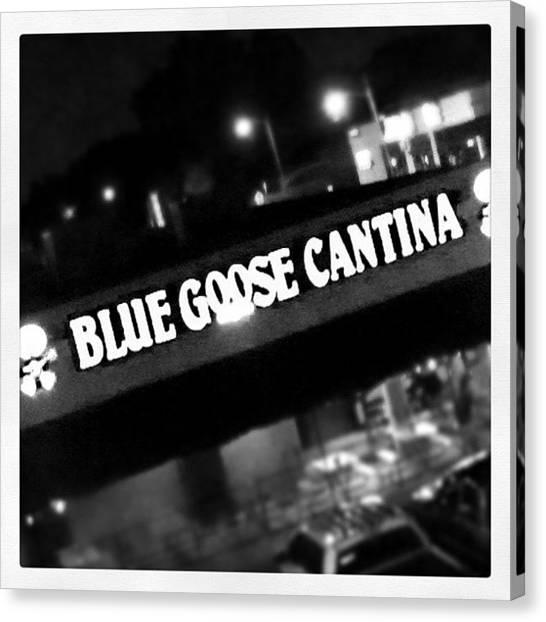 Geese Canvas Print - Instagram Photo by Sherri Galvan