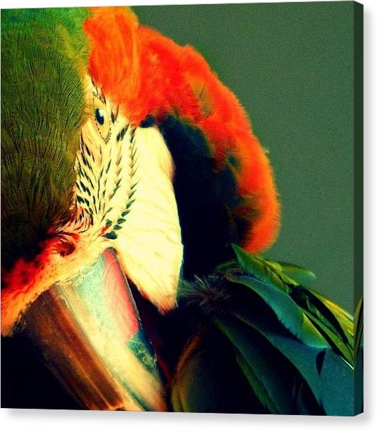 Parrots Canvas Print - Instagram Photo by Kyle Watt