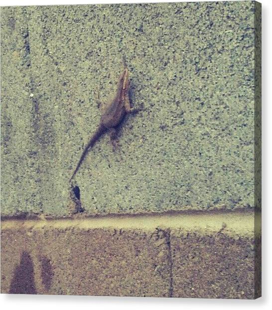 Lizards Canvas Print - #sports #photography #funny #art by Adam Snow