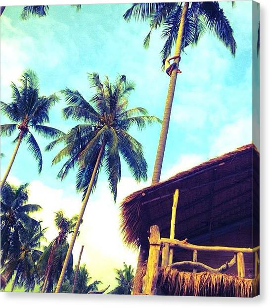 Palm Trees Canvas Print -  by Hitomi Oka